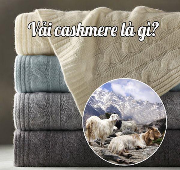 Vải cashmere: Chất liệu xa xỉ dành cho giới thượng lưu